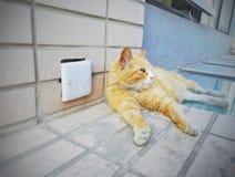 Sommeil mignon de chat Photos libres de droits