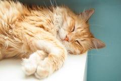 Sommeil mignon de chat de gingembre Photos libres de droits