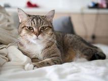 Sommeil mignon de chat sur le lit Photo stock