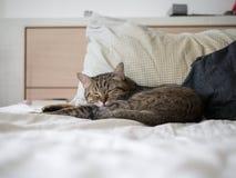 Sommeil mignon de chat sur le lit Image libre de droits