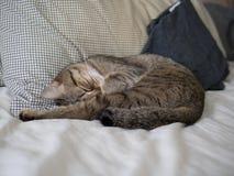 Sommeil mignon de chat sur le lit Photos stock