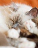 Sommeil mignon de deux chats Photos libres de droits