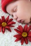 Sommeil nouveau-né Photographie stock