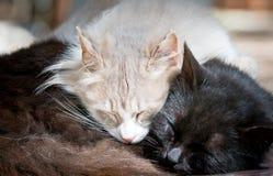 Sommeil paresseux de chats Photo stock