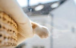 Sommeil profond extrêmement mignon de chat sur la couverture blanche de laine Photos stock