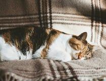 Sommeil profond mignon de chat sur la couverture Image libre de droits