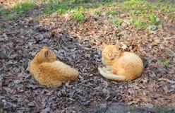 Sommeil rouge de deux chats sur l'herbe Image libre de droits