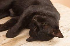 Sommeil thaïlandais de chat noir image libre de droits