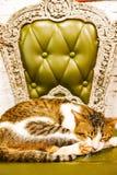 Sommeil thaïlandais mignon de chat sur le shair Chat jaune Photos stock