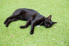 Sommeil thaïlandais noir de chat sur le plancher d'herbe photographie stock