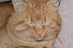 Sommeils auburn de chat de couleur Photo libre de droits
