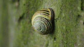 Sommeils d'escargot Photo libre de droits