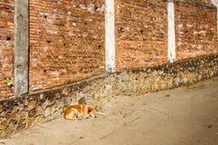 Sommeils rouges de chien Photo stock