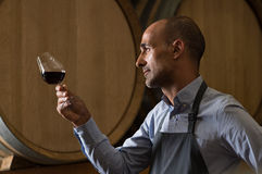Sommelier checking wine Stock Photo