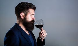 Sommelier, degustator with glass of red wine, winery, male winemaker. Beard man, bearded, sommelier tasting red wine royalty free stock image