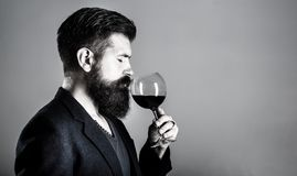 Sommelier, degustator with glass of red wine, winery, male winemaker. Beard man, bearded, sommelier tasting red wine. Man with a glass of wine in his hands royalty free stock photography