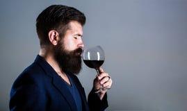 Sommelier degustator med exponeringsglas av rött vin, vinodling, manlig vinproducent Skäggman som är skäggig, sommelieravsmakning royaltyfri bild