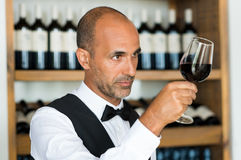 Sommelier examining wine Royalty Free Stock Photography