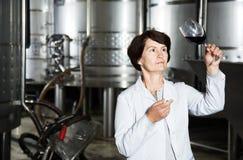 Sommelier kobieta na wytwórnii win Zdjęcia Stock