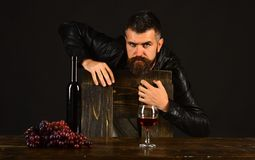 Sommelier leans on wooden chair. Man near glass of wine. Sommelier leans on wooden chair. Man with beard near glass of wine on dark brown background. Degustator royalty free stock photography
