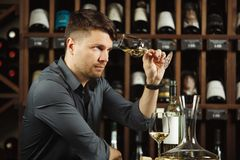 Sommelier looking at wine glass with beverage. Sommelier looking attentively at wine glass with white beverage poured in it, scrutinizing drink on light royalty free stock photos