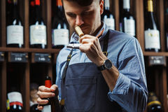Sommelier smelling flavor of cork from red wine. On background of shelves with bottles in cellar. Male appreciating quality of drink. Professional degustation Stock Photography