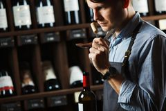 Sommelier smelling flavor of cork from red wine. On background of shelves with bottles in cellar. Male appreciating quality of drink. Professional degustation Stock Image