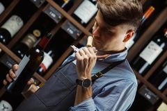 Sommelier smelling flavor of cork from red wine. On background of shelves with bottles in cellar. Male appreciating quality of drink. Professional degustation Royalty Free Stock Image