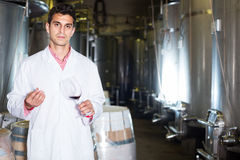 Sommelier in winery Royalty Free Stock Photography