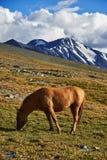 Sommer in Altai Stockfoto