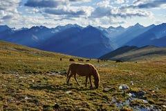 Sommer in Altai 2 Lizenzfreies Stockbild