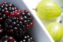 Sommer-Beeren - Brombeeren und Stachelbeeren im Sonnenlicht lizenzfreie stockfotos