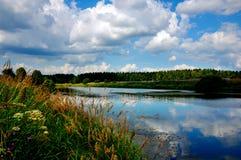 Sommer blüht auf dem Ufer des Sees Stockfoto