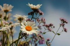 Sommer blüht Blumenstrauß Stockbilder