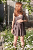 Sommer blüht Hintergrund Stockfotos