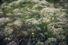 Sommer blüht Hintergrund Stockbilder