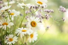 Sommer blüht Weichheit Stockbilder