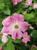 Sommer-Blüte Stockfoto