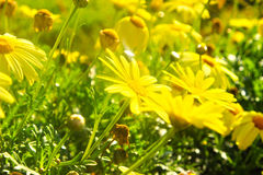 Sommer-Blüte Lizenzfreie Stockfotografie