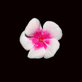 Sommer-Blüte Stockfotografie