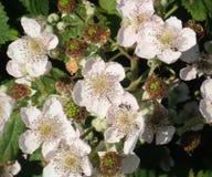Sommer-Blüten Lizenzfreie Stockbilder