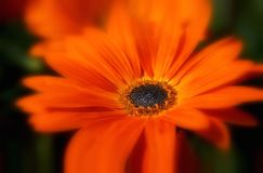 Sommer-Blume Stockbild