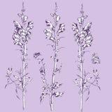 Sommer-Blumen Stockbild