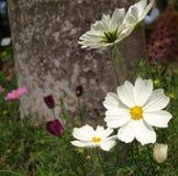 Sommer-Blumen Lizenzfreies Stockfoto