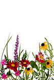 Sommer-Blumen Lizenzfreie Stockfotografie