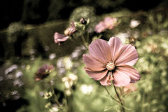 Sommer-Blumen-Garten Lizenzfreie Stockfotografie