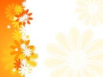 Sommer-Blumen-Hintergrund Lizenzfreies Stockfoto