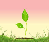 Sommer-Blumen-Wachstum im Garten-Zeichen Lizenzfreie Stockfotografie