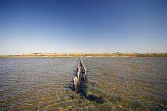 Sommer in dem Wadden-Meer Stockfotografie