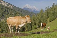 Sommer in den Bergen in Tirol Stockbilder